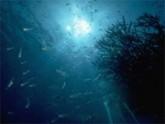 Le fond des mers impacté par le réchauffement climatique